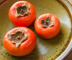 犬に柿(かき)は大丈夫です!風邪の予防にも効果的な果物です