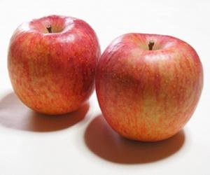 犬に林檎(りんご)は大丈夫です!むしろがんの抑制も期待できます