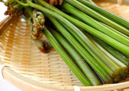 春の山菜の種類!苦味が栄養!旬の時期のこごみやコシアブラの天ぷらレシピ!