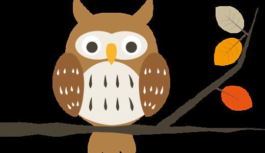 フクロウとミミズクの違い!一番の特徴は耳!性格や大きさや寿命は?